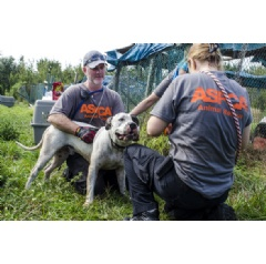 ASPCA responders remove one of dozens of dogs from Sabbath Memorial Dog Rescue Center in Okeechobee, Fla. who will be transported and made available for adoption with Second Chance Rescue in New York, N.Y.