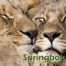 South Africa�s Springbok Casino Celebrating Valentines�with 140 Free Spins the Day Before