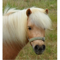 "Palomino Miniature Horse ""Summer,"" provided by Shannon and Lyn Panzo for rehabilitation."