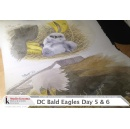 See Daily Paintings of Bald Eagle Family in Nation�s Capital