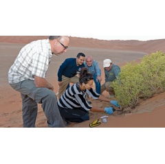 From left to right: Professor Daniele Daffonchio; research scientist Dr. Ramona Marasco; Samer Abduljabbar; Wayne Sweeting and sanctuary ranger Hashim Al Dairi take microbiological samples from the roots of a desert shrub.