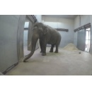 Smithsonian's National Zoo Welcomes Male Asian Elephant