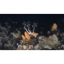Vulnerable ecosystems revealed in Antarctic seafloor dives to receive protection