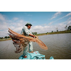 Fish farmers at one of the Hung Vuong farms in the Mekong Delta catch and weigh pangasius fish before releasing them back into their ponds. -© WWF / Greg Funnell