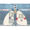 Underwater Power Generation: Energy from seawater: power generator autonomously switches between two functional modes