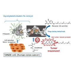 Newly developed method to deliver a drug to cancer cells by using an artificial metalloenzyme that protects a metal catalyst (Ru), and a sugar chain (N-Glycans) that guides the metalloenzyme to the target cells.