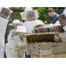 Whole Kids Foundation Raises More Than $113,000 for 56 Educational Beehives to Schools Across the U.S., U.K. and Canada
