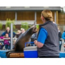 Blair Drummond safari park invests £1m for modernisation of Sea Lion Enclosure