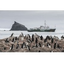 Antarctic penguin colonies decline by as much as 77% in last 50 years