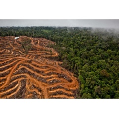 The concession owned by PT Multi Persada Gatramegah (PT MPG), a subsidiary of Musim Mas company, a palm oil supplier to Procter & Gamble in Muara Teweh, North Barito, Central Kalimantan. © Ulet Ifansasti / Greenpeace
