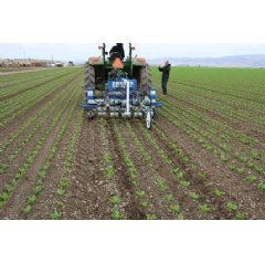 The robotic weeder goes between the crop rows. The rows must be very straight and precise for the weeder to properly do its job. Photo credit Steven Fennimore.