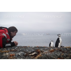 Javier Bardem and chinstrap penguin - 