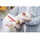 Strict biosecurity recommended in the fight against African Swine Fever