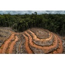 World's biggest brands still linked to rainforest destruction in Indonesia