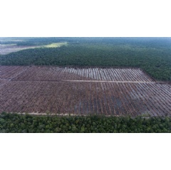 Time for a ban on deforestation for palm oil, not a moratorium, says Greenpeace