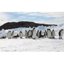 Unless warming is slowed, emperor penguins will march toward extinction