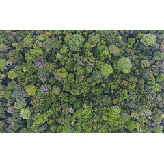 Some 300 tree species grow in 120 acres of old-growth forest at Barro Colorado Island, Panama.