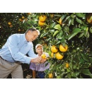 Bayer and the Citrus Research and Development Foundation team up to find solutions against Citrus Greening